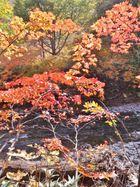 15.10.9-10 奥志賀紅葉の滝めぐりと焼額山山頂トレッキング4
